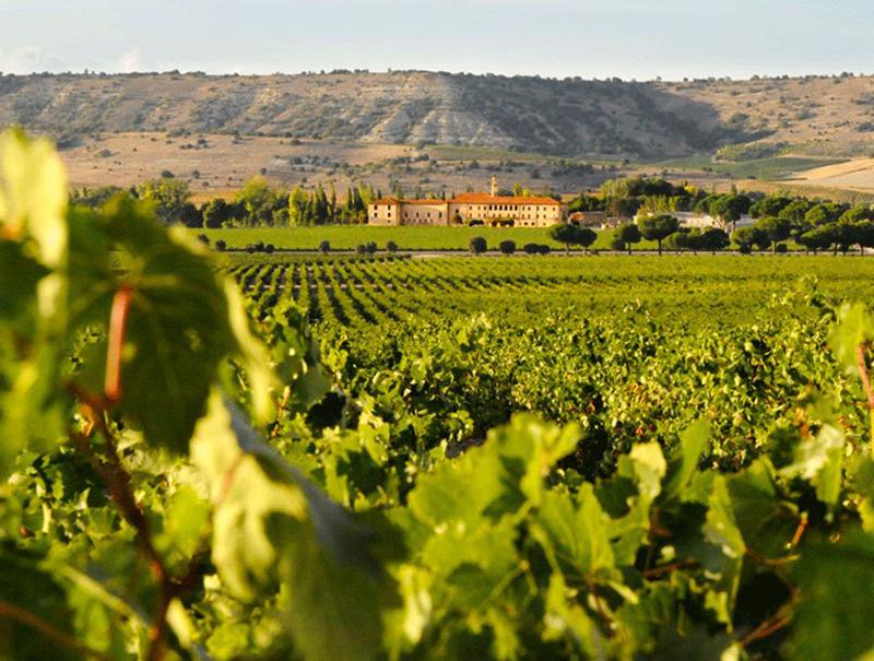 Vineyard in Sardón del Duero. / Photo: cntraveler.com.