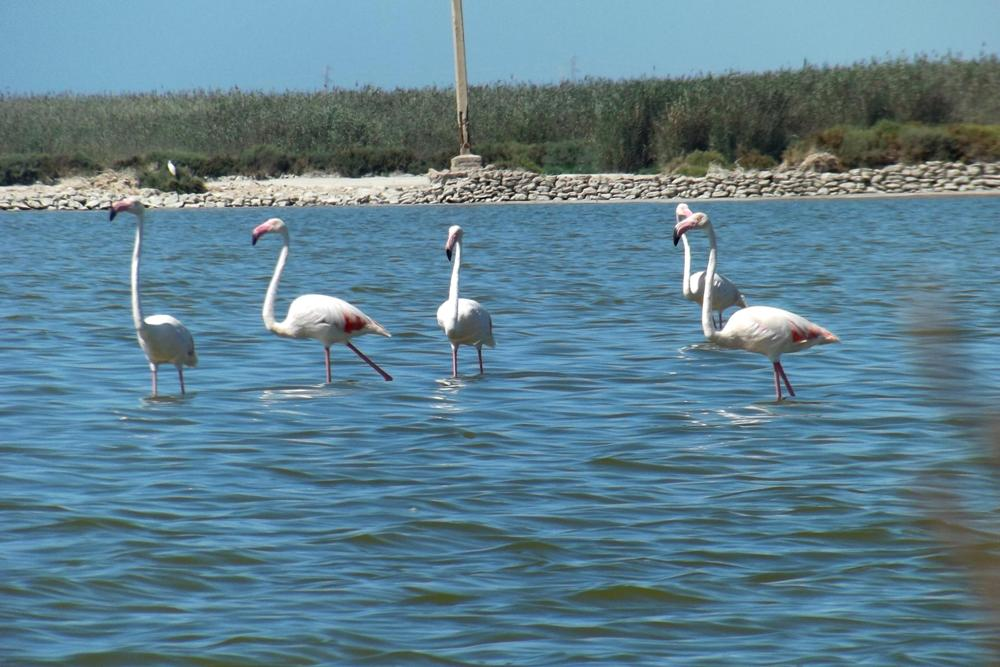 Reserva Natural de Punta Entinas-Sabinar. / Foto: foro.tiempo.com.