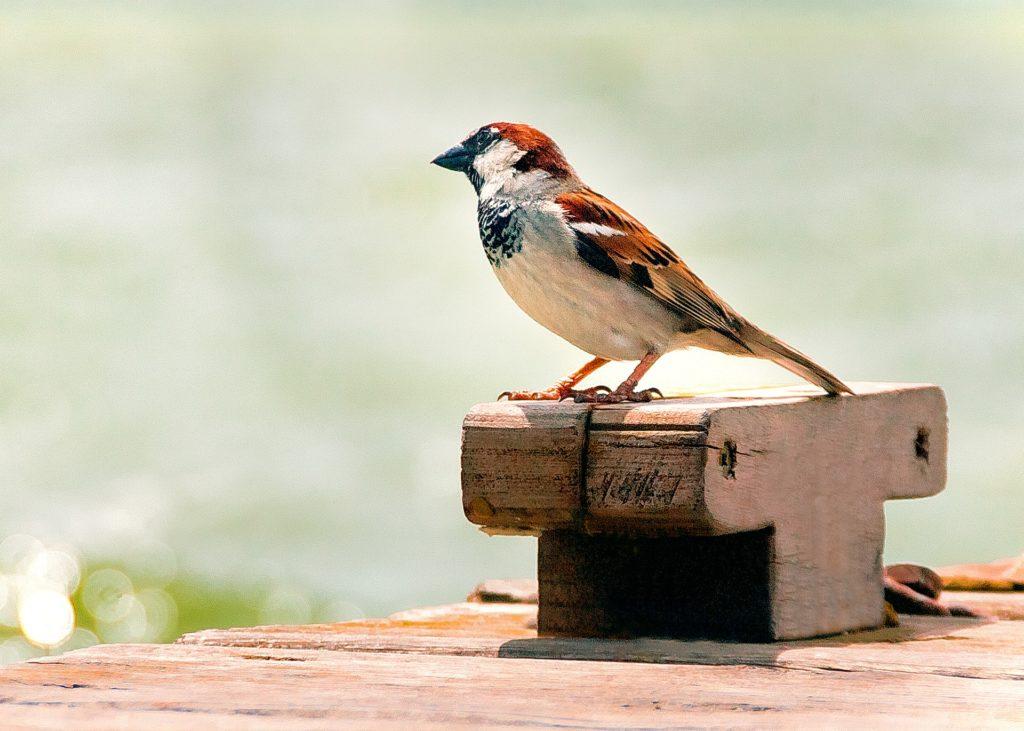 Pájaro en la Albufera de Valencia