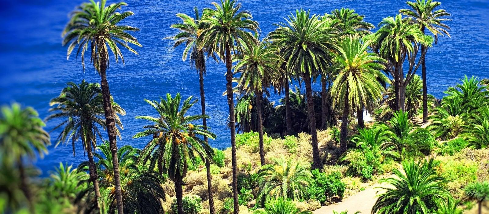 Tenerife - Vincci Hoteles
